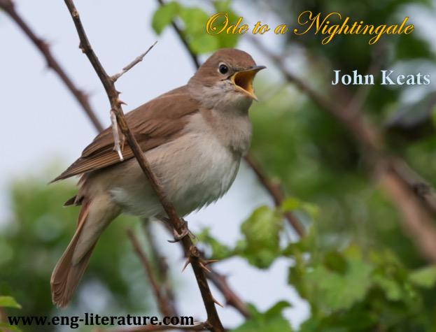 """Is Keats' """"Ode to a Nightingale"""" a poem of escape or a reflection of human experience? or How does Keats explore the capacity of the imagination to transcend reality in """"Ode to a Nightingale""""?"""